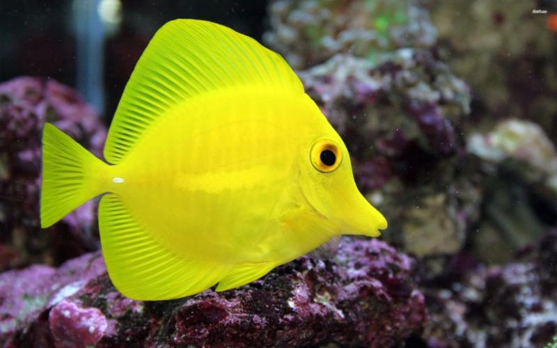 www.fishhelpers.com