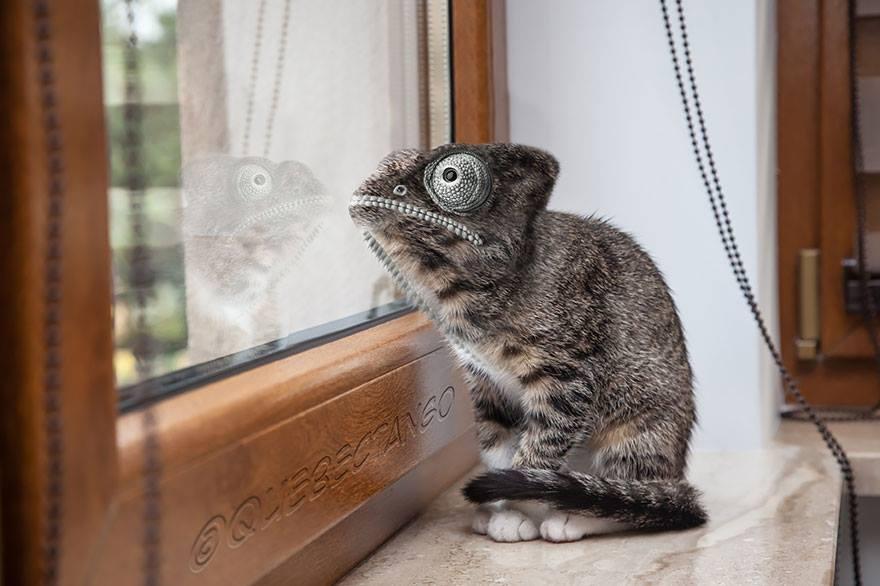 kucing-bunglon
